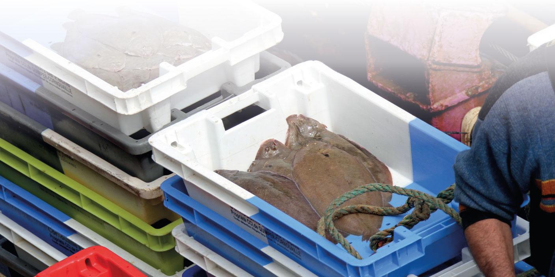Groupe Mericq, spécialiste de la marée et des produits de la mer
