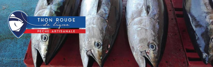 Premier thon rouge de ligne écocertifié pêche durable